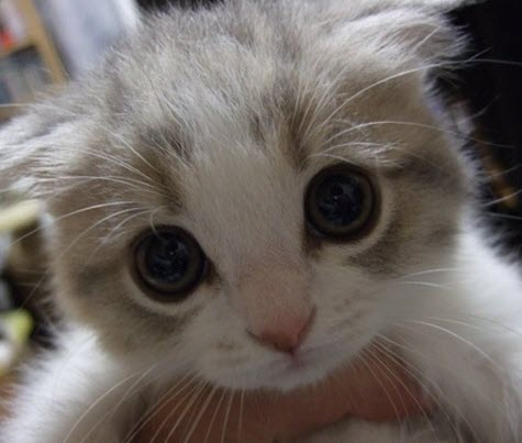 kitten big eyes