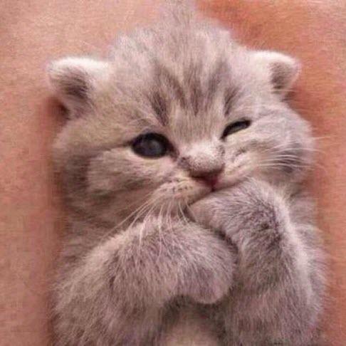 What A Little Cutie 30th September 2014
