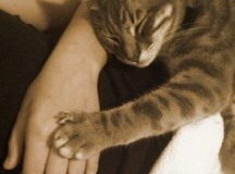 paw on hand