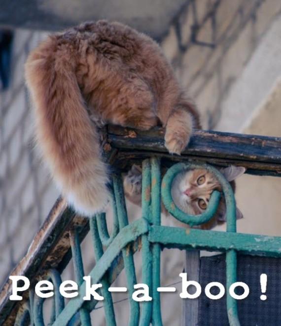 peek a boo balcony