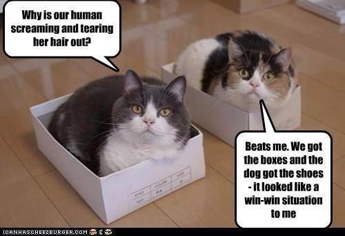 shoe box lol