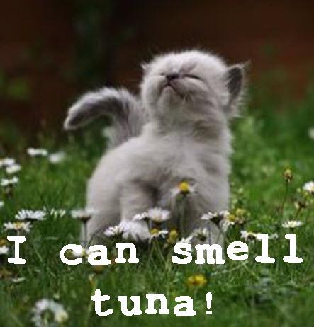 smell tuna