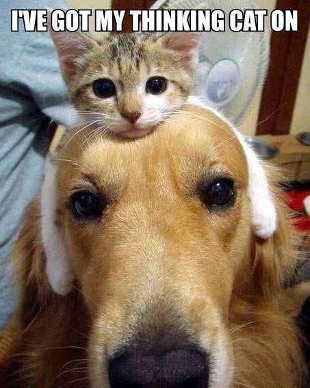 thinking cat (2)