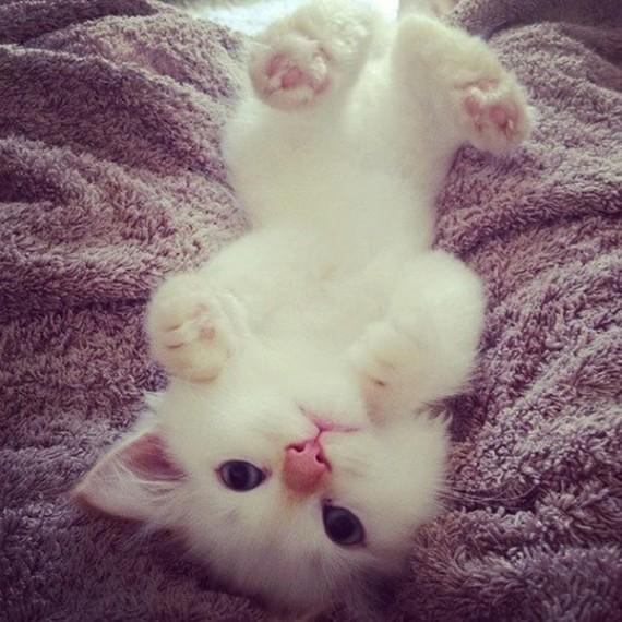 upside down white kitten