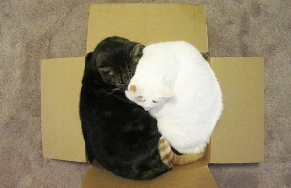 2 cats in small box