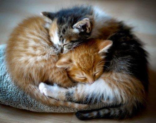 2 kittens cuddles
