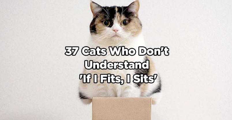 Don T Always Cat Meme