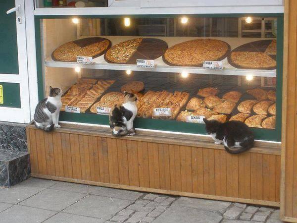 baker shop