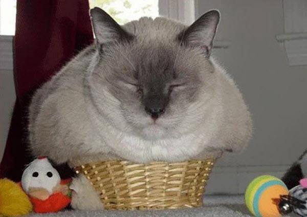 brown cat stuffed in box