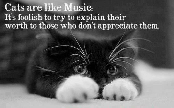 cat are like music