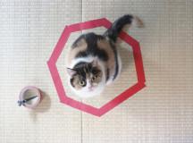 cat in septagon