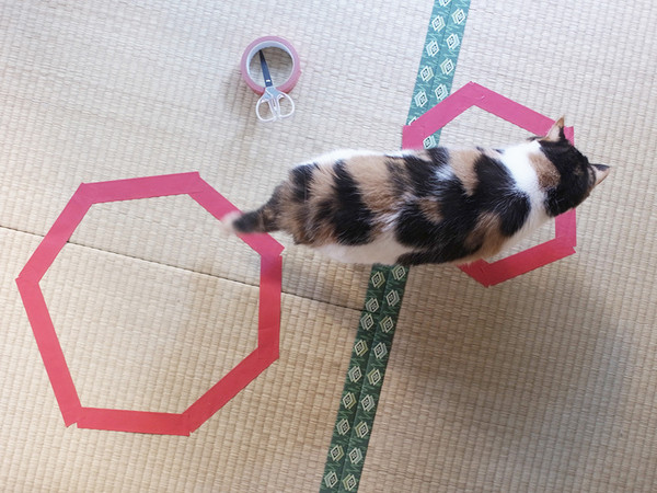 cat heads to smaller circle