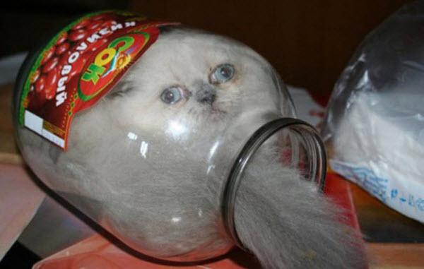 cat in bottle
