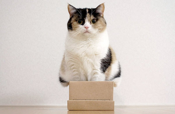 cat in box with lid