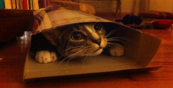 cat in cereal box