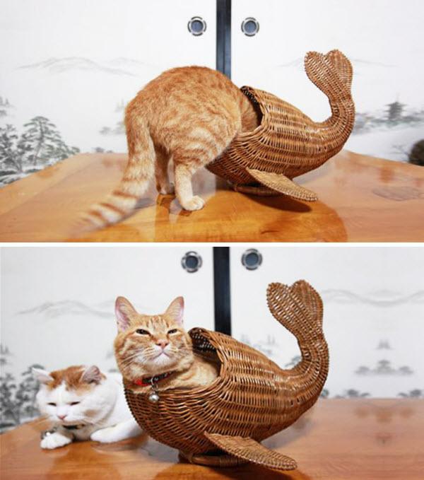 cat in fish basket