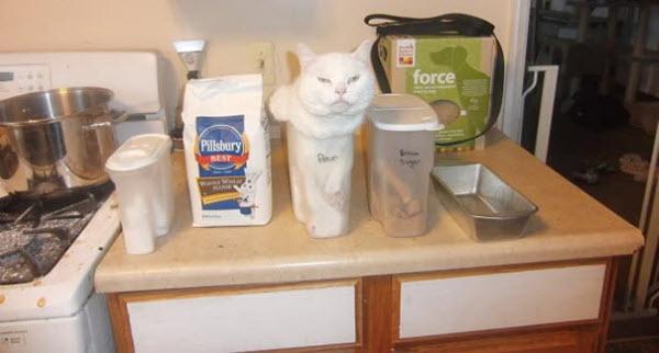 cat in flour box