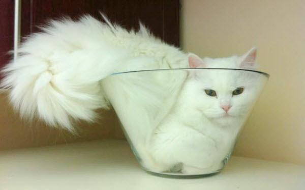 cat in glass bowl