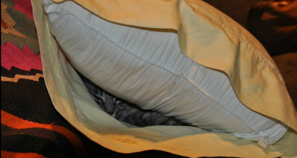 cat in pillow