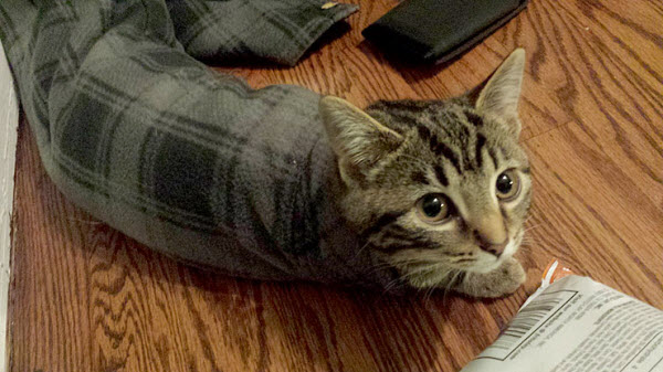 cat in sleeve