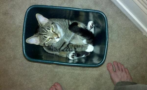 cat in trash can