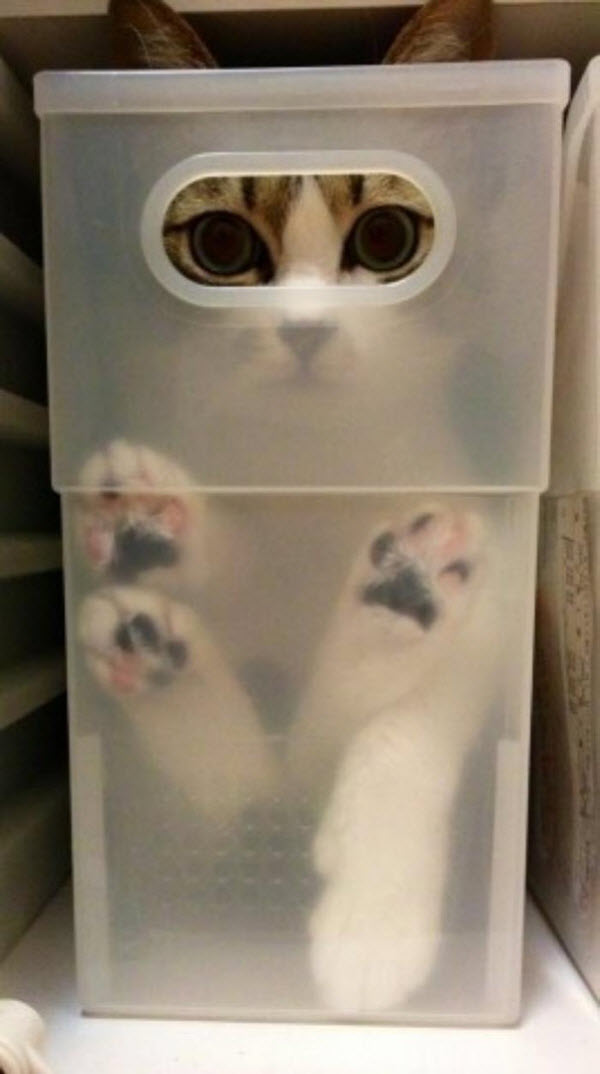 cat in tupperware