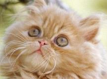 dreamy eyes