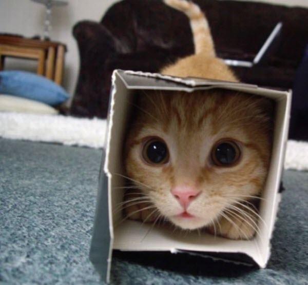 ginger cat in opened box tube