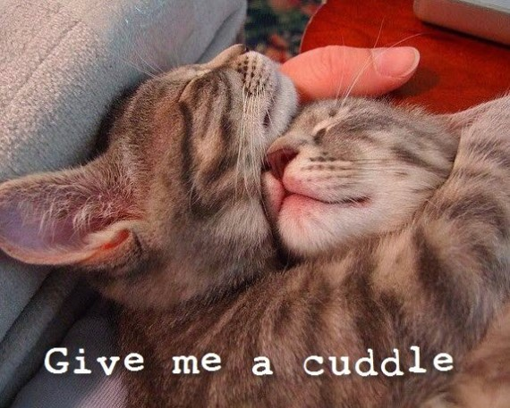 give me a cuddle