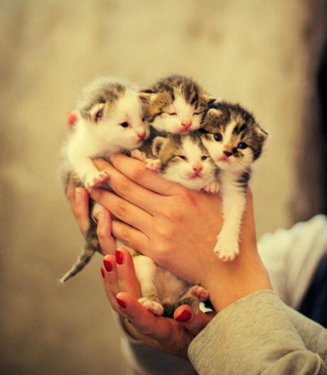 handful of kittens