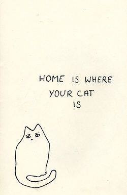 home is where the cat is