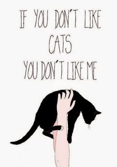 if you dont like cats