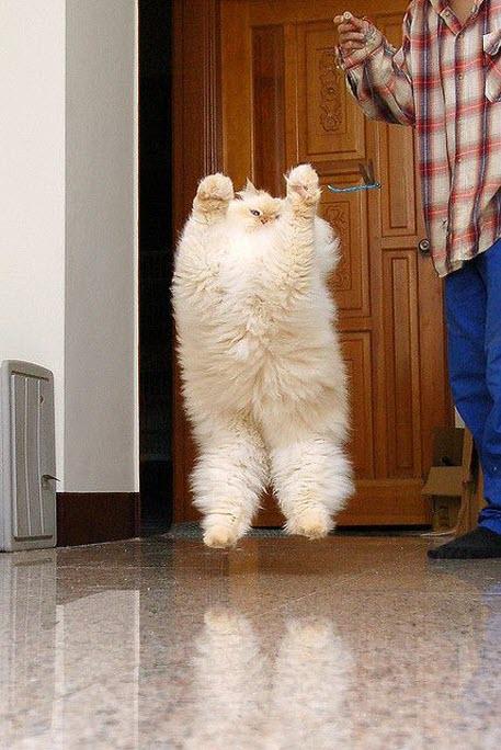 jumping furball