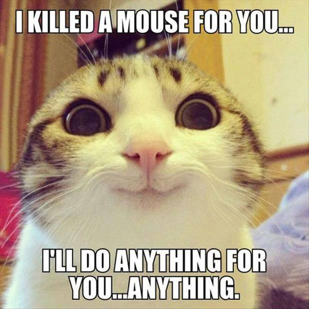 killed a mouse lol