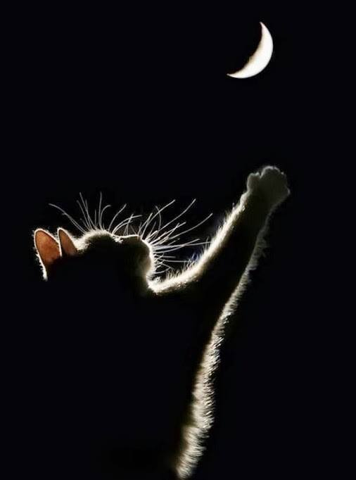 kitty moon