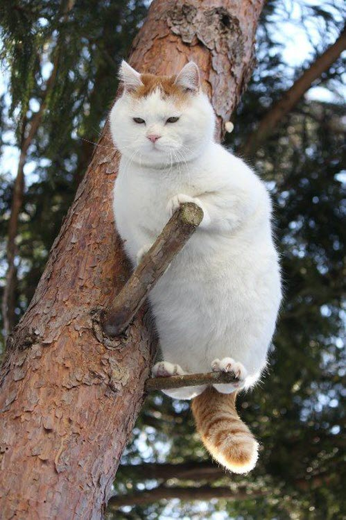 perch cat