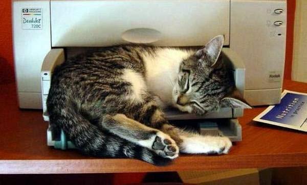cat asleep in printer