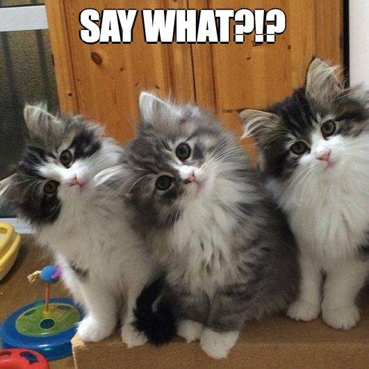 prevent cat spraying