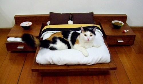 spoilt cat