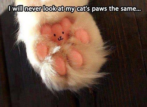 teddy paw lol