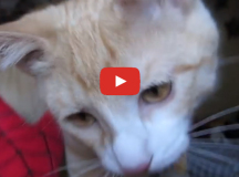 the-kitten-pounce