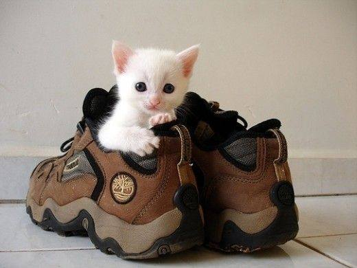white kitten in trainer