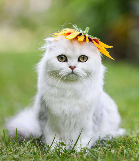 white kitty flower