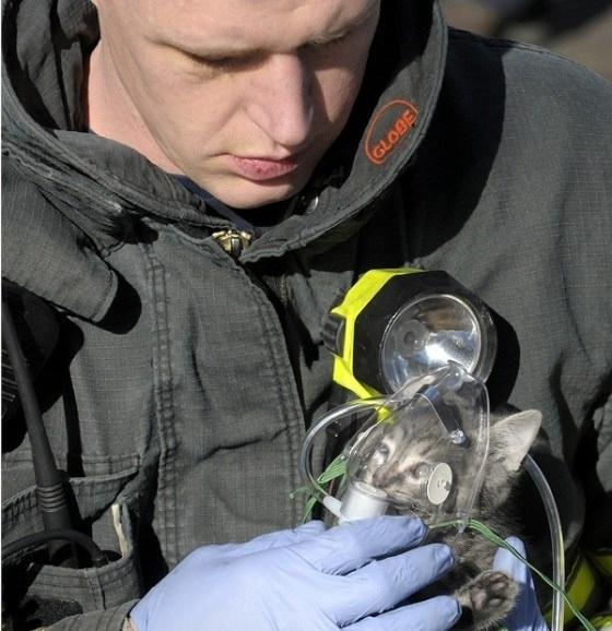 A firefighter giving a kitten oxygen