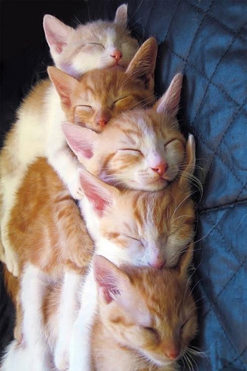 Cuddle 12