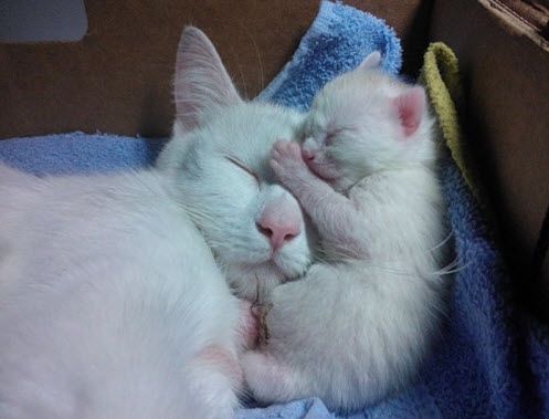 Cuddle 15