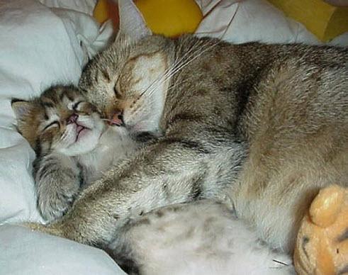 Cuddle 6