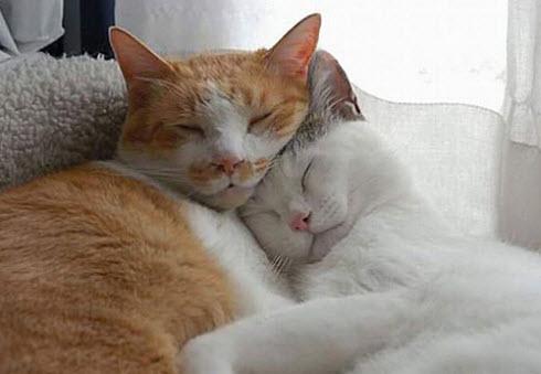 Cuddle 7