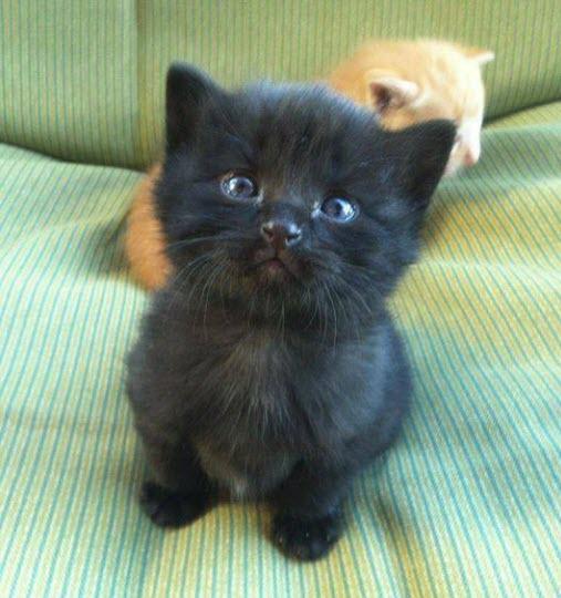 black kitten 3