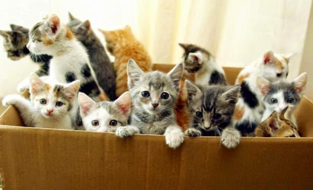 box kittens 2